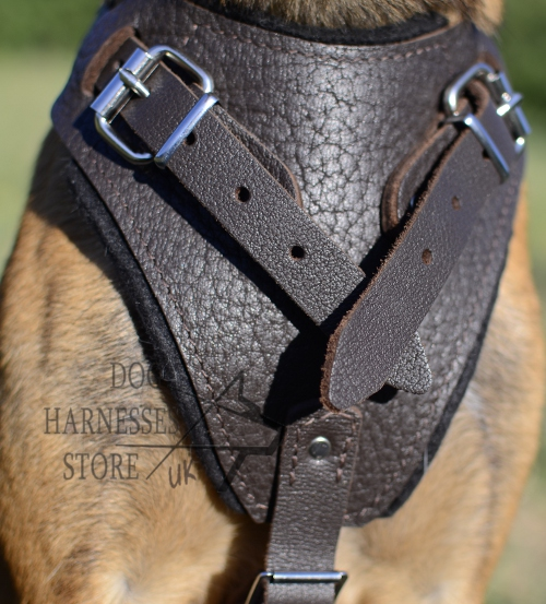 Leather Walking Harness UK