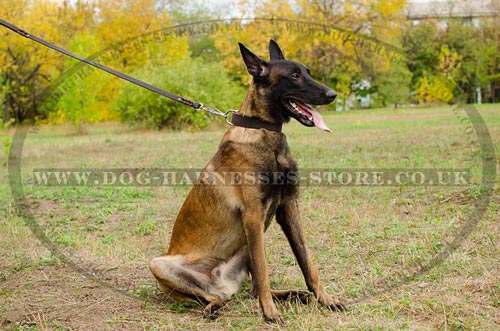 Wide Leather Dog Collar 1.5 Inches for Malinois Shepherd