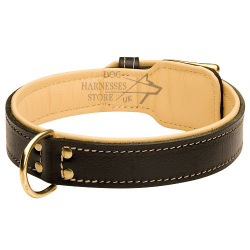 Wide Leather Dog Collar Stitched and Padded with Soft Nappa