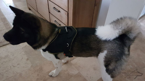 Akita Harness of Nylon with Upper Handle for Multifunctional Use