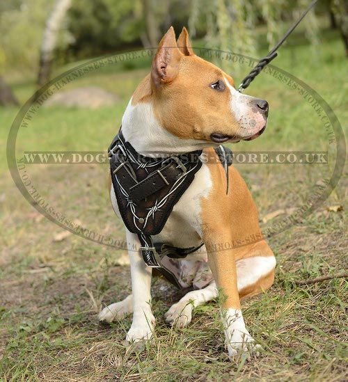 Amstaff Harness with Barbwire Hand Painting on Genuine Leather - Click Image to Close