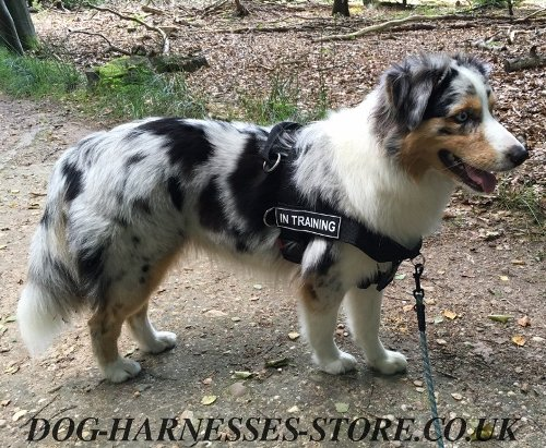 Australian Shepherd Harness with ID Patches, All-Weather Nylon - Click Image to Close
