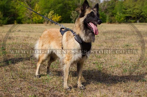 Belgian Tervuren Dog Harness for Work, Attack Training, Walks