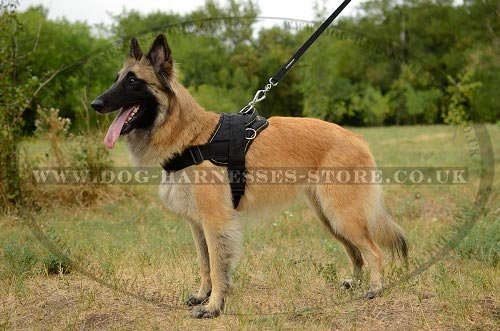 Belgian Tervuren Dog Harness of Nylon for All-Weather Activities