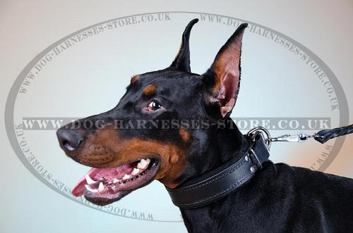 Best Doberman Dog Collar of Leather with Soft Felt Lining