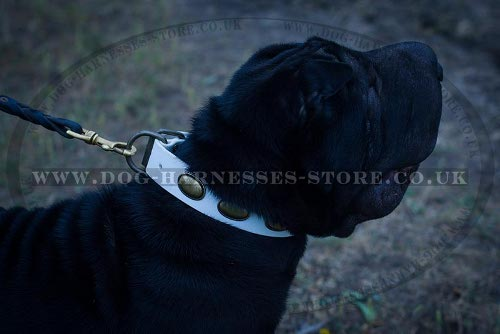 Best Dog Collar for Shar-Pei Extravagant Look During Walking