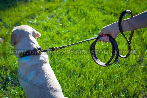 Best Dog Leash for Labrador Walking and Training, Leather
