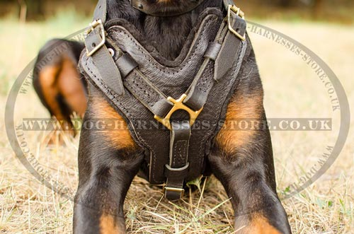 Bestseller! Harness for Doberman of Leather and Brass Hardware