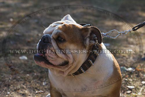 Fashion Dog Collar Spikes and Studs Combo for British Bulldog