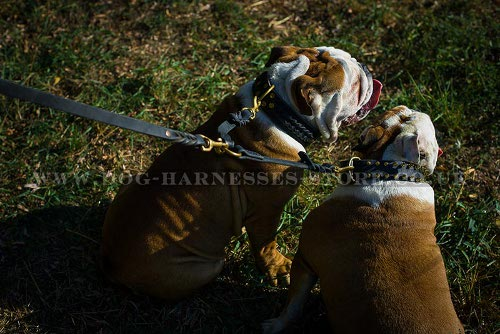 Two Bulldogs Walking Coupler Leash, Braided