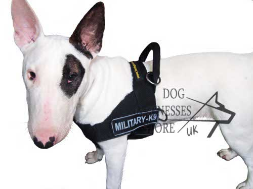 All Weather Nylon Bull Terrier Harness with ID Patches