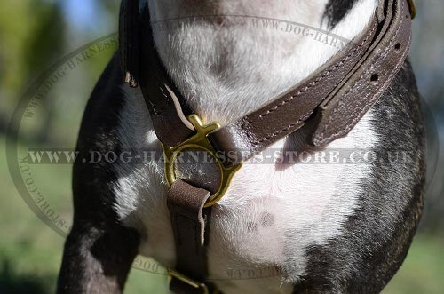 Bestseller! Bull Terrier Leather Walking and Tracking Harness