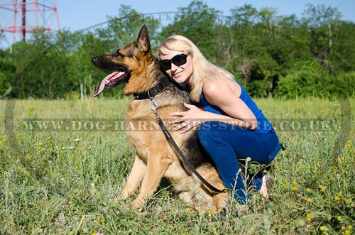 Buy New Dog Collar for Strong German Shepherd Style
