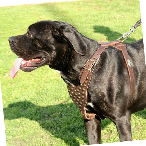 Walking Dog Harness for Large Dogs with Best Studs - Click Image to Close
