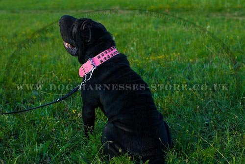 Collar for Shar-Pei Dog Girl of Pink Leather with Square Studs