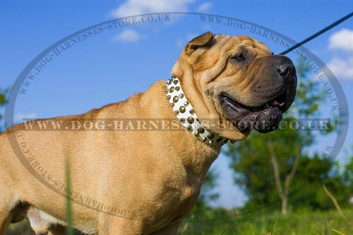 Collar for Shar-Pei Dog, White Leather with Studs and Cones