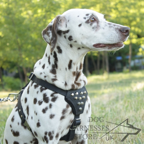 ▴ Dalmatian Harness with Silver Cones▴