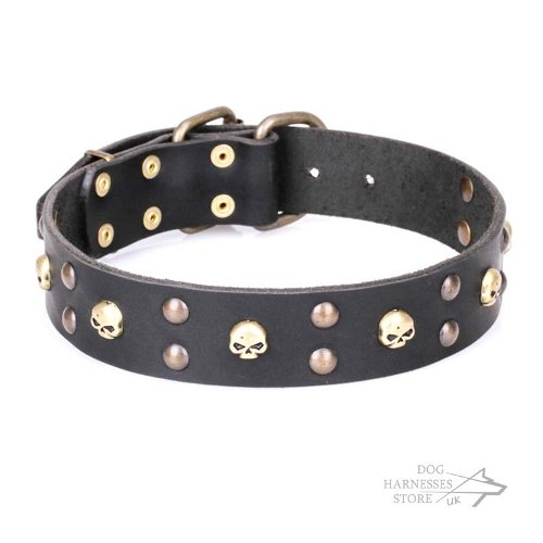 "Decorated Leather Dog Collar with ""Hard Rock"" Skulls and Studs - Click Image to Close"