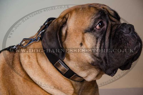 Bullmastiff Leather Collar with Brass Plates - Click Image to Close