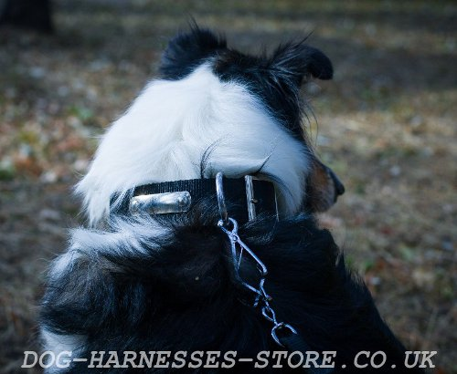 Collie Dog Collar for Identification, Control & the Best Comfort