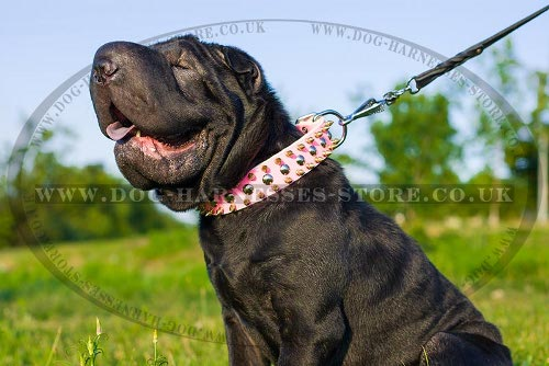 Dog Collar for Shar-Pei Female, Spiked and Studded Pink Leather