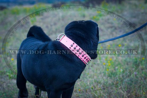 Dog Collar for Shar-Pei of Pink Leather with Spikes and Studs