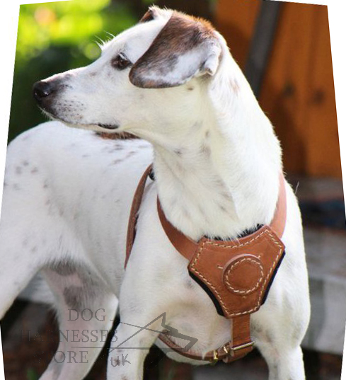 Padded Dog Harness for Small, Medium Dog Breeds
