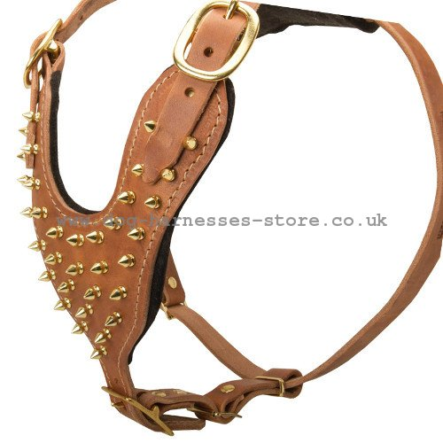 Leather Dog Harness for Walking with Golden Brass Spikes