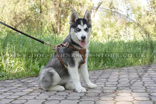 Dog Leash for Siberian Husky with Length Regulation, Multimode