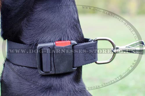 Dog Training Collar UK of Adjustable Nylon Strap with D-ring