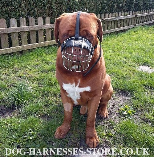 Bestseller! Dogue de Bordeaux Muzzle of Maximum Comfort