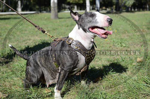 Soft Leather Dog Harness with Studded Chest for Bull Terrier