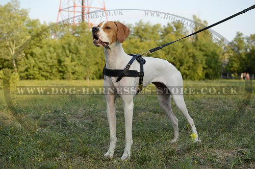 English Pointer Harness Leather Light-Weighted for Tracking