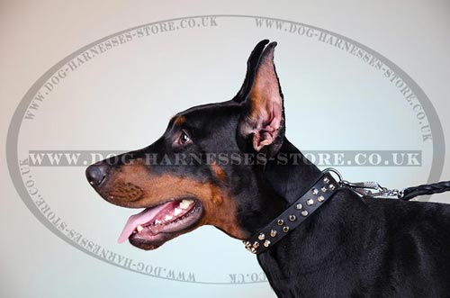 Fancy Dog Collar of 1 1/4 Wide Leather with Nickel Studs