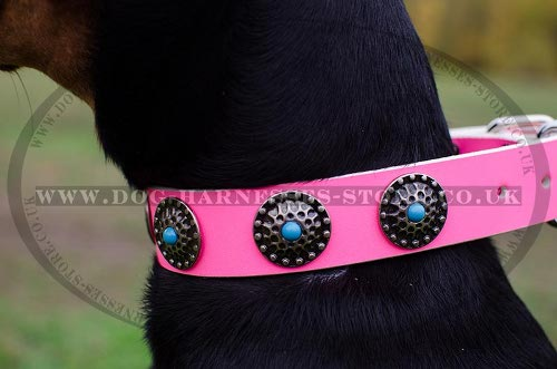 Female Doberman Collar of Hot Pink Leather with Blue Stones