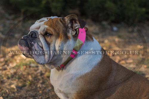 English Bulldog Female Dog Collar Pink Leather and Antique Decor