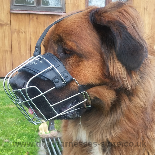 German Bear Dog Muzzle of Chrome-plated Wire, Adjustable Straps