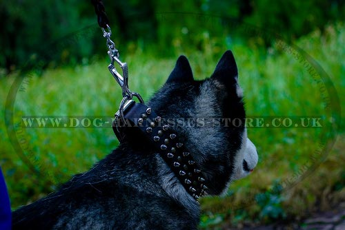 Good Dog Collar for Husky of Leather with Spikes and Studs - Click Image to Close
