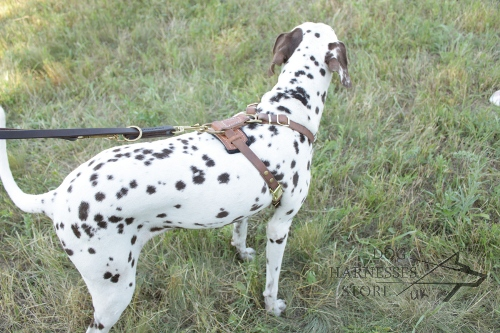 Multi Function Dog Lead for Dalmatian - ⑦ ways of Use