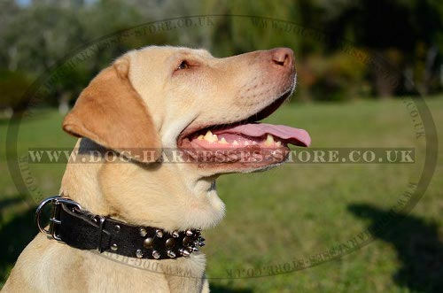 Labrador Dog Collar Leather with Spikes and Studs for Walking