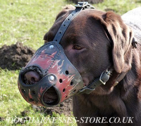 Labrador Dog Muzzle, Exclusive Hand Painted Flames on Leather - Click Image to Close
