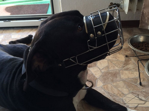 Large Dog Muzzle of Wire Basket Cage for Amstaff and Pitbull Mix