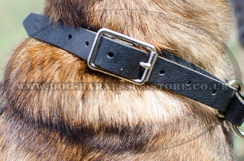 Leather Choke Collar for Belgian Malinois Reliable Control