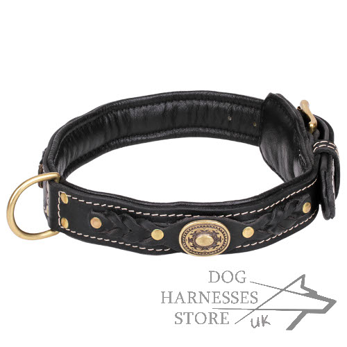 Padded Luxury Dog Collar with Braids and Decorative Plates