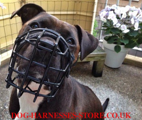 Amstaff Wire Muzzle, American Staffordshire Training Product
