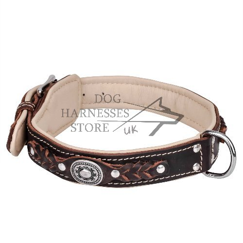 Head-spinning Padded Royal Dog Collar
