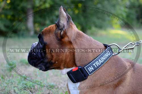 Dog training collar for boxer with ID patches
