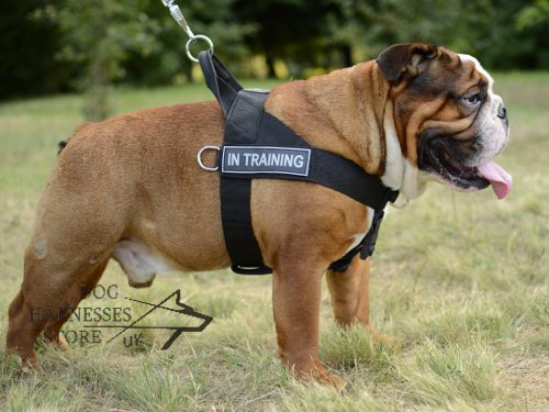 Bestseller! Nylon Dog Harness for English Bulldog Training
