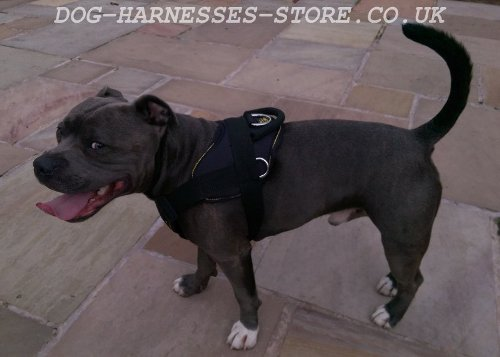 Staffordshire Bull Terrier Nylon Dog Harness with Padded Chest