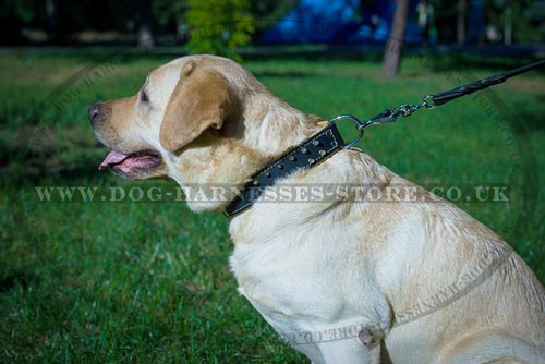 Padded Leather Dog Collar with Brass Barbs for Labradors